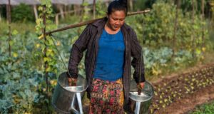 Women's role in water resource management and irrigation stressed