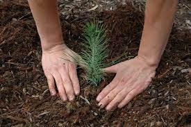 Tree plantation helps improve women's economy